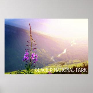 Poster Fireweed au parc national de glacier