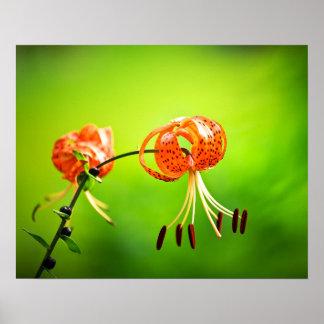 Poster Fleur