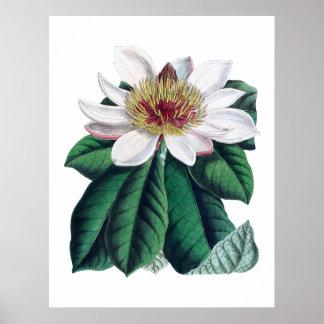 Poster Fleur blanche Cusion de magnolia grande