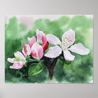 Poster Fleur de pommier