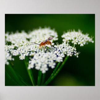 Poster Fleur et insecte