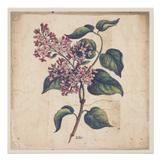 Poster Fleurs antiques de lilas d'affiche d'impression de