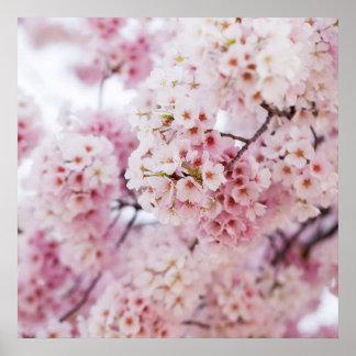 Poster Fleurs de cerisier