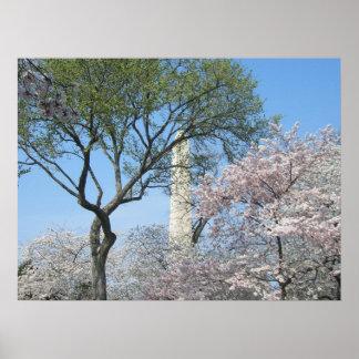 Poster Fleurs de cerisier et le monument de Washington