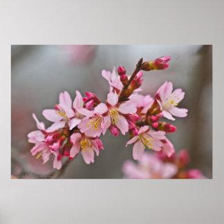 Poster Fleurs de cerisier japonaises roses amorties