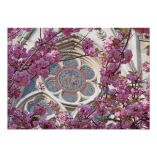 Poster Fleurs de cerisier roses