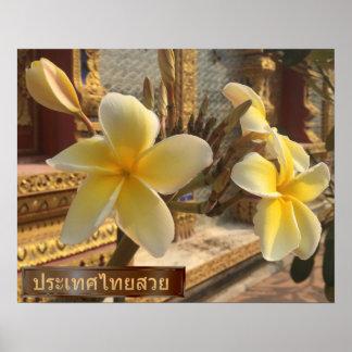 Poster Fleurs de Frangipani en Thaïlande