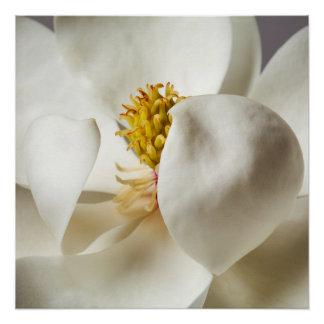 Poster Fleurs florales d'arbres de magnolia de fleur