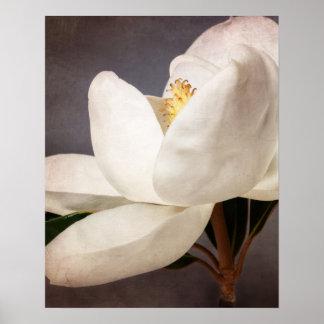 Poster Fleurs florales de magnolia de fleur blanche