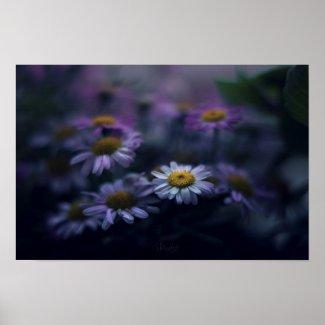 Poster Fleurs / Flowers