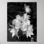 Poster Fleurs noires et blanches de photographie