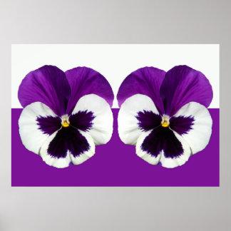 Poster Fleurs violettes pourpres de pensée