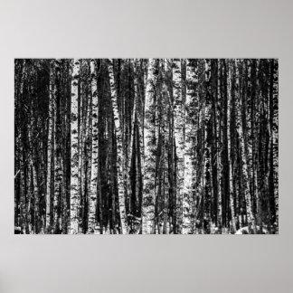 Poster Forêt abstraite noire et blanche de bouleau