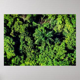 Poster Forêt des Caraïbes