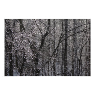 Poster Forêt glaciale de scintillement dans la lumière I