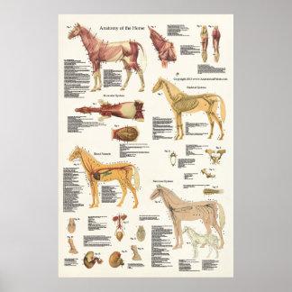 Poster Format d'affiche équine d'anatomie de cheval grand