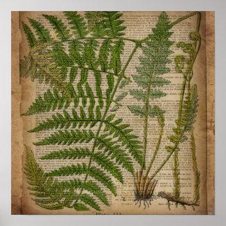 Poster fougère botanique française d'impression de