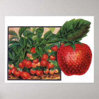 Poster Fraises vintages, fraisiers à une ferme
