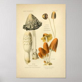 Poster Français vintage d'impression d'art de champignons