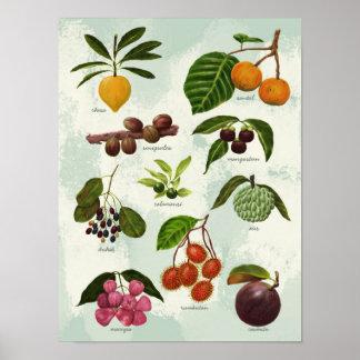 Poster Fruits tropicaux philippins exotiques peints à la