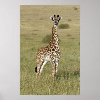 Poster Girafe de bébé à Nairobi