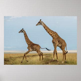 Poster Girafe et jeune fonctionnement