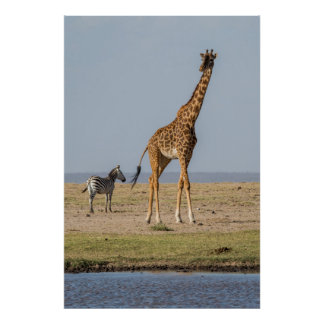 Poster Girafe par un point d'eau