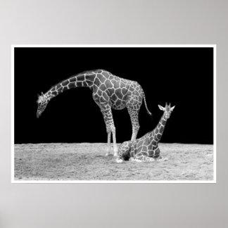 Poster girafes sous les cieux africains au blanc de noir