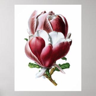 Poster Grande affiche de fleurs de magnolia rose