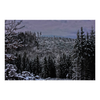 Poster hdr snow speckled forrest