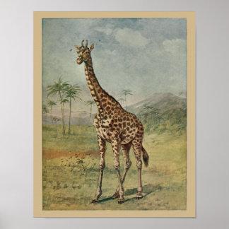Poster Histoire naturelle de girafe d'impression animal