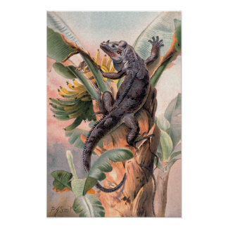 Poster Iguane noir tropical, animal sauvage vintage de