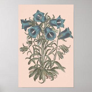 Poster Illustration botanique alpine de fleur de Bell