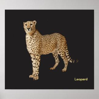 Poster Image animale pour l'affiche