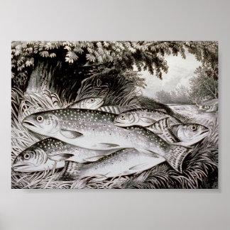 Poster Image de cru de pêche de truite