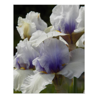 Poster Iris blancs floraux
