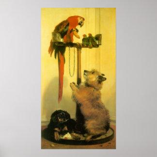 Poster Islay, Tilco, un ara et inséparables par Landseer