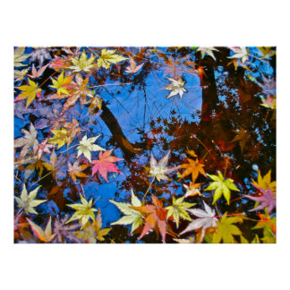 Poster Japanese Maple Reflections