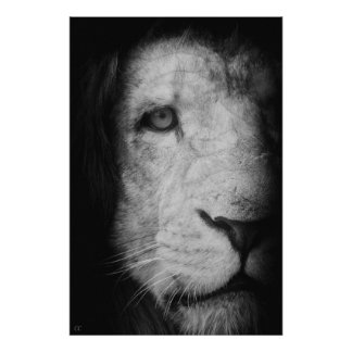 Poster Je suis le roi !