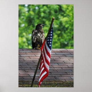 Poster KMCphoto Eagle patriotique
