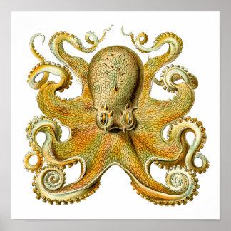 Poster Kraken vintage, poulpe Gamochonia, Ernst Haeckel