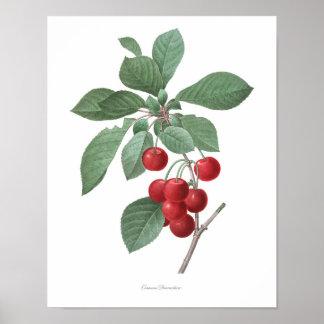 Poster La copie botanique LA PLUS DE HAUTE QUALITÉ des
