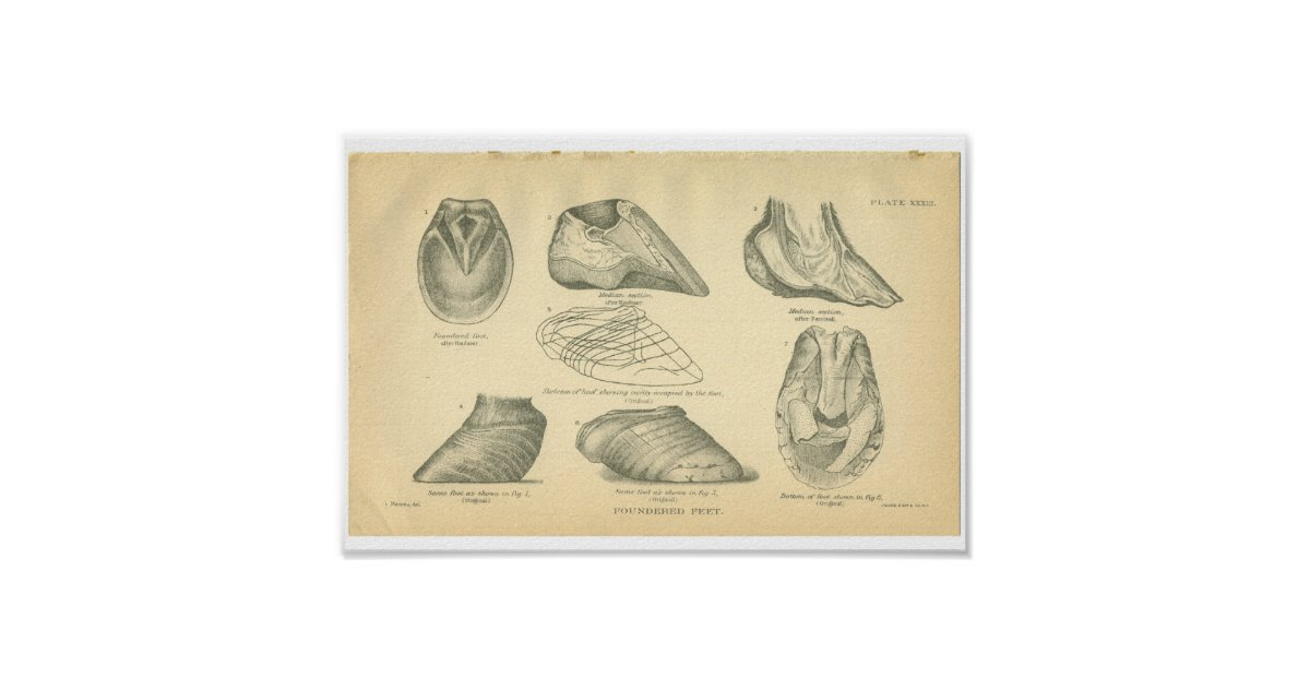 Poster la copie vintage d 39 anatomie de cheval s 39 est effond for Decoration maison 97400