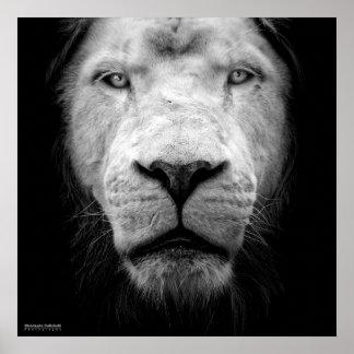 Poster La lion blanc - The white lion