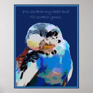 Poster La perruche veut une éraflure