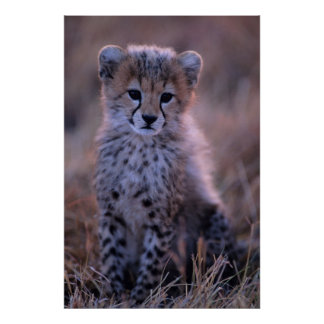 Poster La savane de CUB | de guépard, Kenya