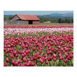 Poster La tulipe met en place floral