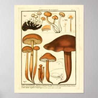 Poster La variété vintage de Brown répand copie de