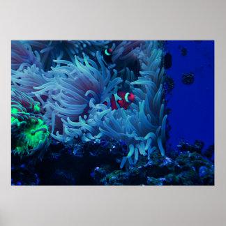 Poster La vie sous-marine