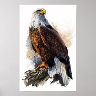 Poster L'aigle chauve